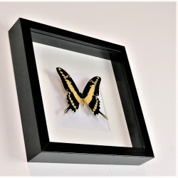 """Wandbild """"Schmetterling"""", 25 x 25 cm"""